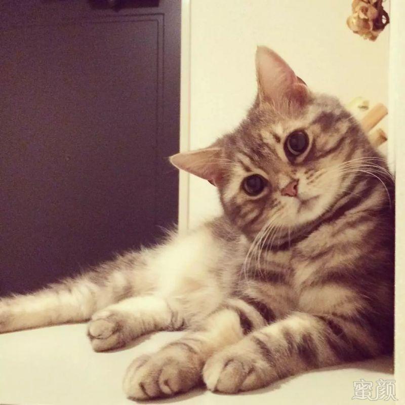日本小姐姐养了一只自带卧蚕的小猫,连喝个水都那么可爱,把网友萌到老