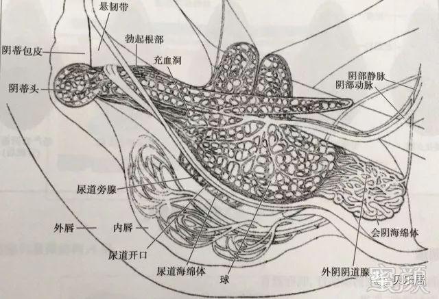 解剖手绘图片大全